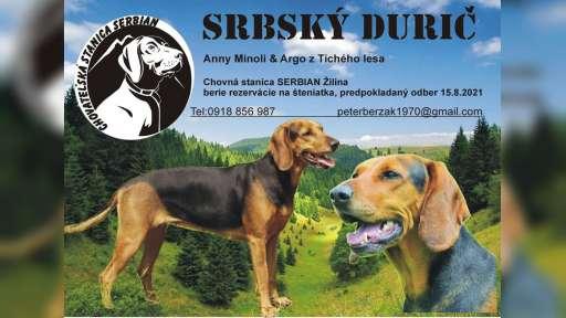 Srbský durič šteniatka - Srbský durič (150)