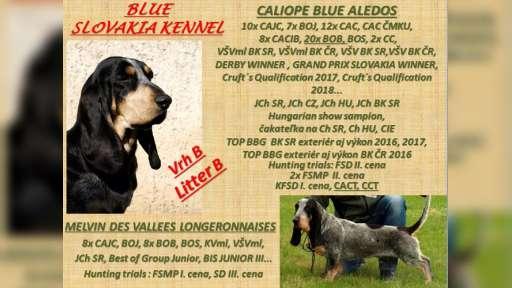 Chovateľská stanica BLUE SLOVAKIA berie záznamy na šteniatka plemena Modrý gaskonsky baset - Modrý gaskoňský baset (035)