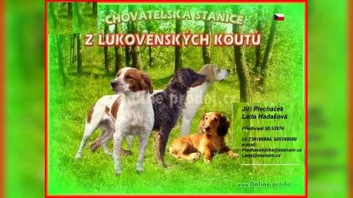 Z Lukovenských koutů - Jiří Plecháček