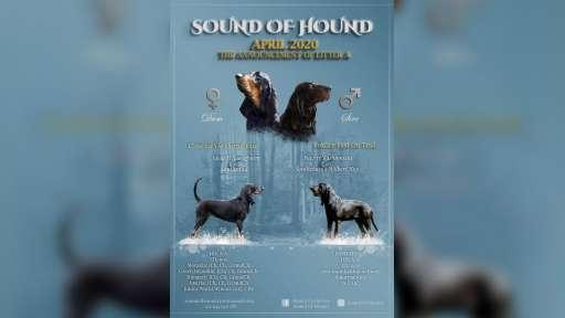 Sound Of Hound - Andrea Egyedova